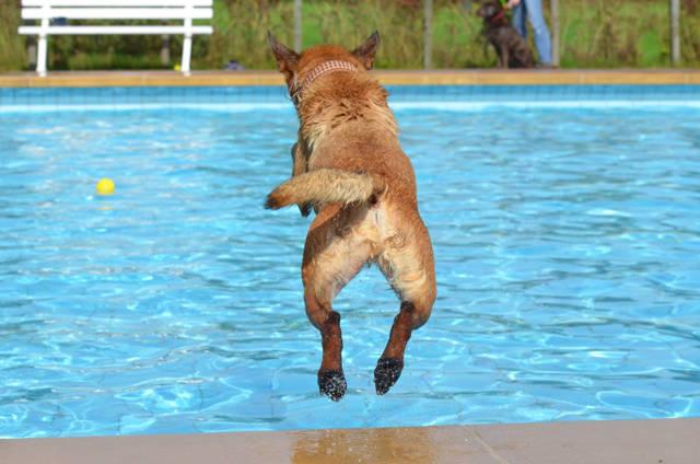 """Schwimmen und Apportieren im Wasser macht vielen Hunden riesigen Spaß. Darum öffnet das Familienbad am 18. September erstmal seine Pforten für einen """"Hundimfreibad-Tag"""". (Foto: katrinbellyeu)"""